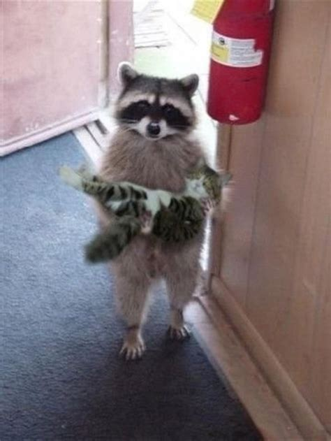 priceless raccoon    time