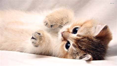 kitten background kitten wallpaper 1280x800 best hd desktop