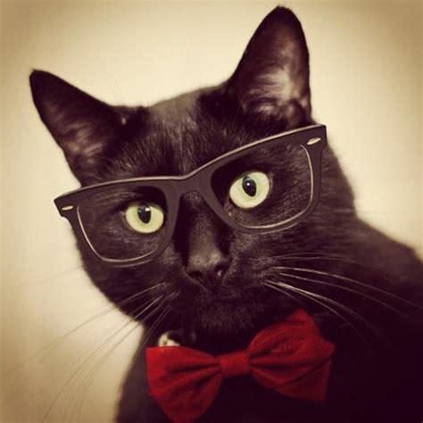 imagenes hipster gatos gatos hipster taringa