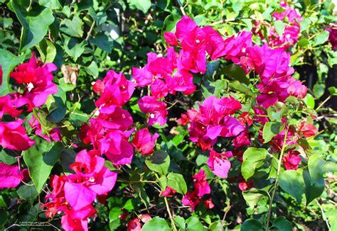 flowering shrubs in florida florida s thorniest plants phillip s