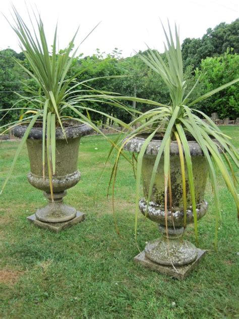 a pair of decorative garden urns with plants 4828