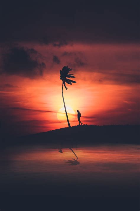 wallpaper sunset palm tree silhouette  photography