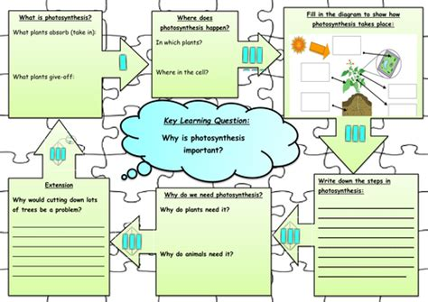 tes new year story resources photosynthesis jigsaw worksheet by annabelbianca