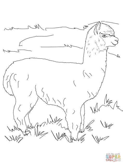 dibujo de alpaca posando para colorear dibujos para