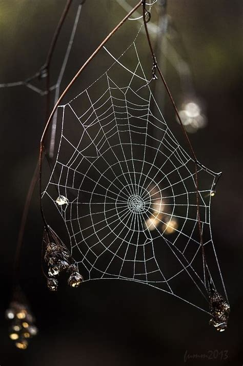 bid web 1000 images about spider webs on charlottes