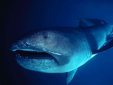 tiburon alfombra los tiburones m 225 s raros taringa