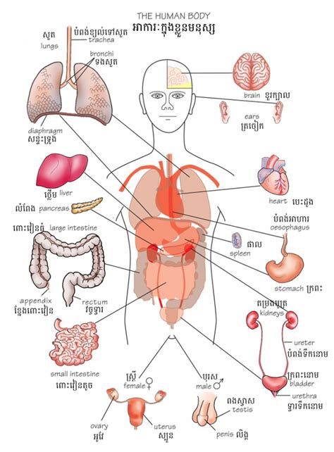 human body sections human body parts