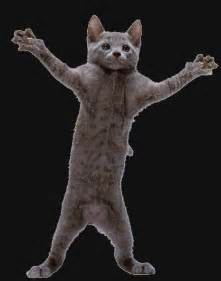 Pics photos dancing cat dance cat gif