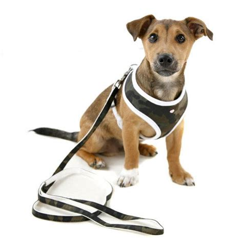 best harness for dogs safety harness for dogs hose for dogs elsavadorla