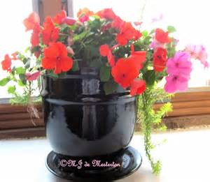indoor flowering plants elegant survival news