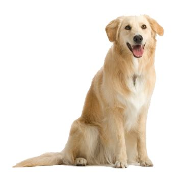 puppy png png image dogs puppy pictures free