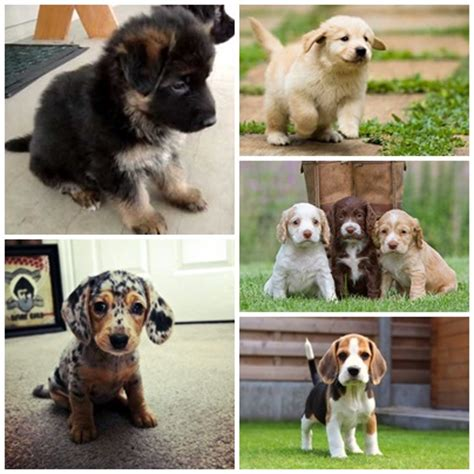 top ten cutest puppies top 10 most cutest puppies 4k wallpapers