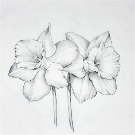narcissus flower tattoo designs image result for narcissus flower flower tattoos