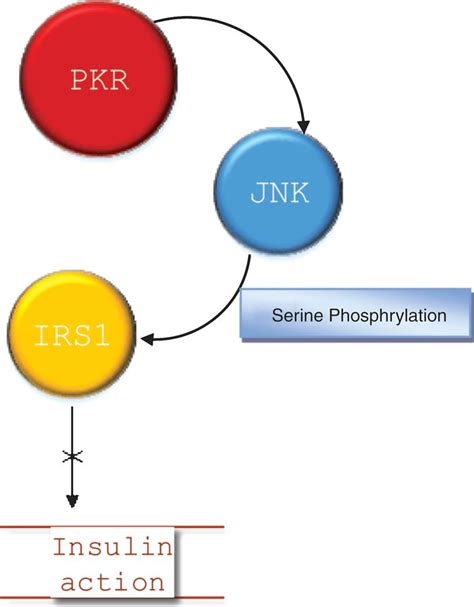 protein kinase r protein kinase r and the metabolic ios press