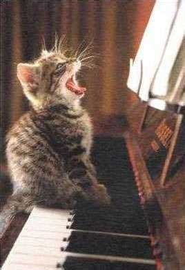 Singing Cat Meme - rires le blog de tigresse