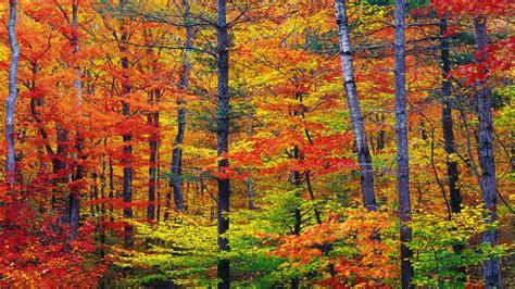 colors of autumn ortenia