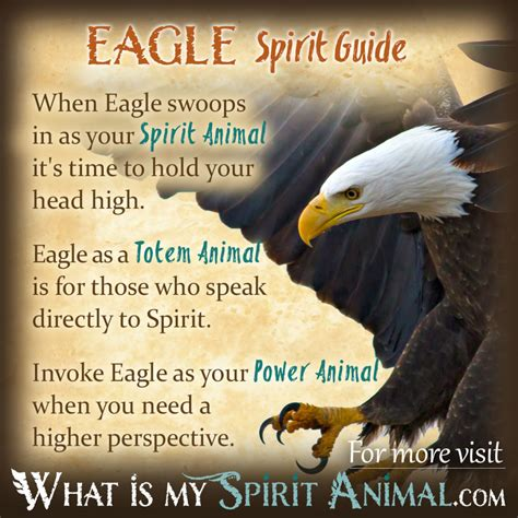 be my meaning eagle symbolism meaning spirit totem power animal