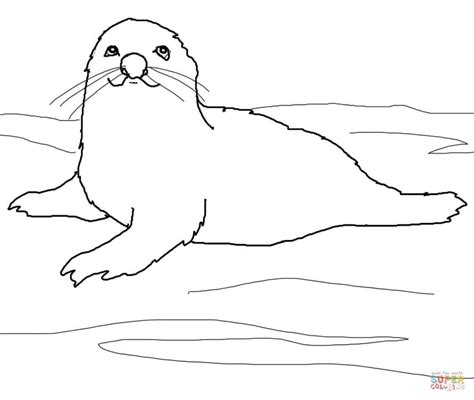 seal coloring pages image gallery harp seal coloring page