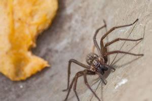 spinnen wohnung mittel gegen spinnen was hilft beim vertreiben
