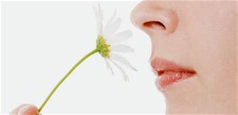 imagenes sensoriales olfativas concepto los sentidos auditivo visual gustativo olfativo y