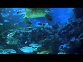 Aquarium   The official website for Aquarium
