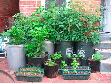 contained garden no yard no problem how to garden in a small space