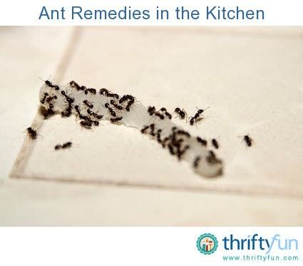 how do i get rid of ants in the kitchen naturally what