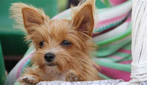 small house dog breeds cute small dog breeds the cutest small dogs