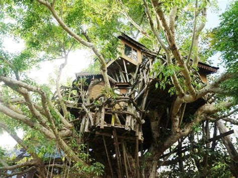 best treehouse best price on pai treehouse resort in pai reviews