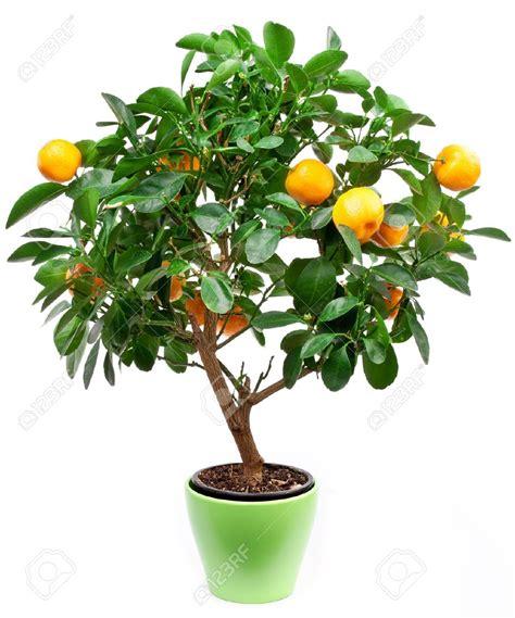 tree with small orange fruit so many trees so many memories