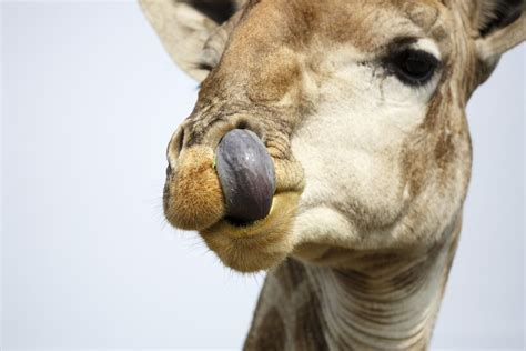 7 Strange And Wonderful Animal Facts by 10 And Wonderful Facts About Animals