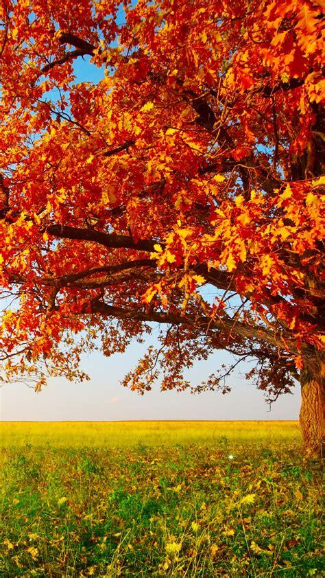 wallpaper autumn tree leaves field grass  nature