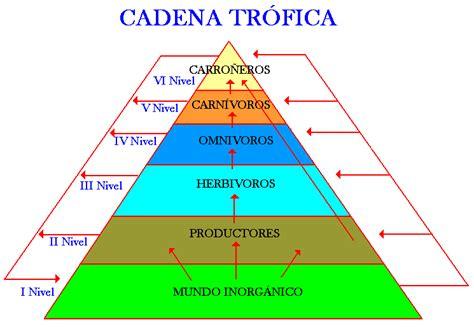 cadenas y redes y piramides alimenticias redes cadenas y piramides alimenticias geografia y