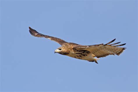 imagenes de jordan volando halc 243 n volando hd fotoswiki net