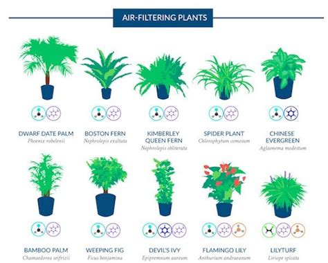 air filtering plant guides purifying house plants