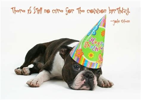 Happy Birthday Wishes Dogs A Happy Birthday Wish To Your Favorite Dog Lover This