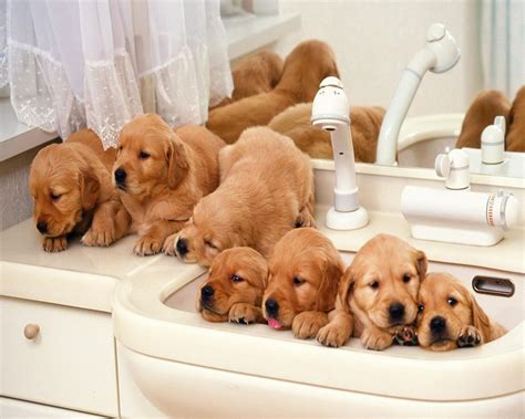 beautiful puppies beautiful dogs hd wallpapers collection world