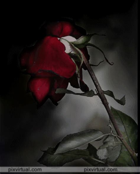 imagenes de flores tristes mis rosas tristes africa puente cristo una mujer de ceuta