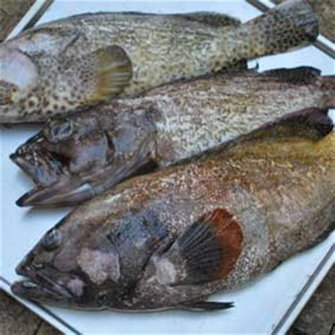 Daging Tokek Bakar serdadoedapoer sup kepala ikan