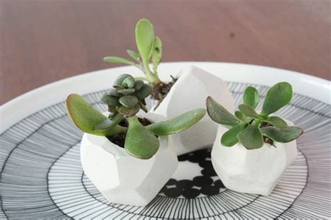 plants for small pots diy pots for small plants how about orange