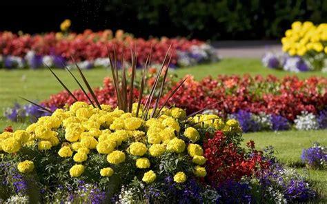 fiori da giardino fiori da giardino giardinaggio
