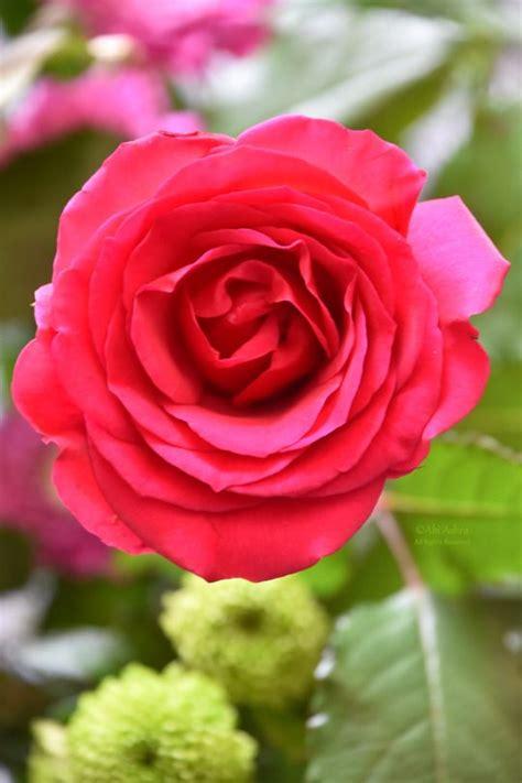 tutti i tipi di fiori nomi oltre 1000 idee su tipi di fiori su nomi di