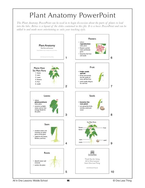 6 best plant layout software free download for windows 6 09 plant anatomy lesson plan download one less thing