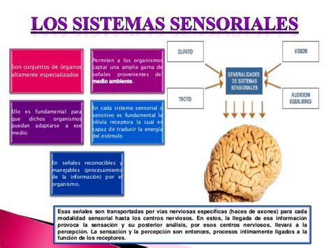 imagenes de umbrales sensoriales sistemas sensoriales y modalidades perceptivas
