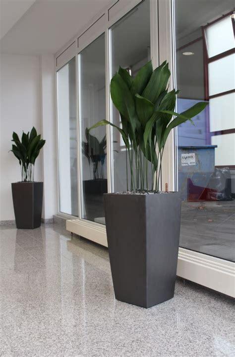 schall reduzieren wohnzimmer empfangsbegr 252 nung mit hydrokultur pflanzen in lechuza