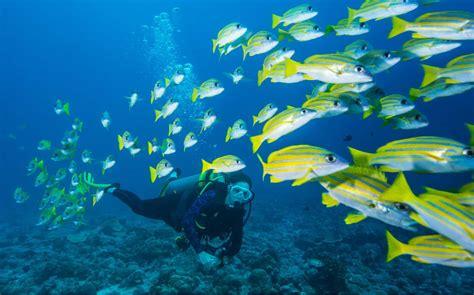 dive in scuba dive micronesia diving holidays original diving