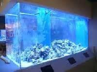 aquarium design delhi live fish shop marine fish aquarium manufacturer