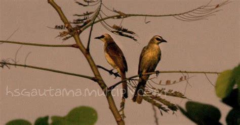 Multi Bird Pakan Burung Parrot kolom hsgautama yuk pasang bird feeder dirumah agar