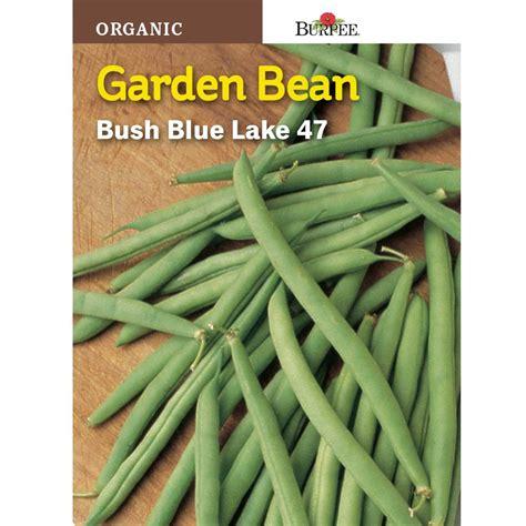 burpee bean bush blue lake  organic seed