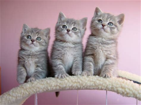 three cute kittens cute cats and little kittens
